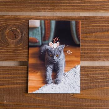 """Открытка """"Кот и мышка. HELP"""""""